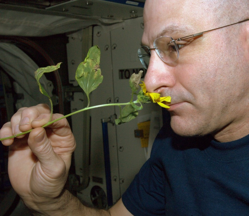 "NASA astronaut Don Pettit grew a zucchini plant during his time aboard the International Space Station for Expedition 30/31. He blogged about the experience in his ""Letters to Home."" Image Credit: NASA"