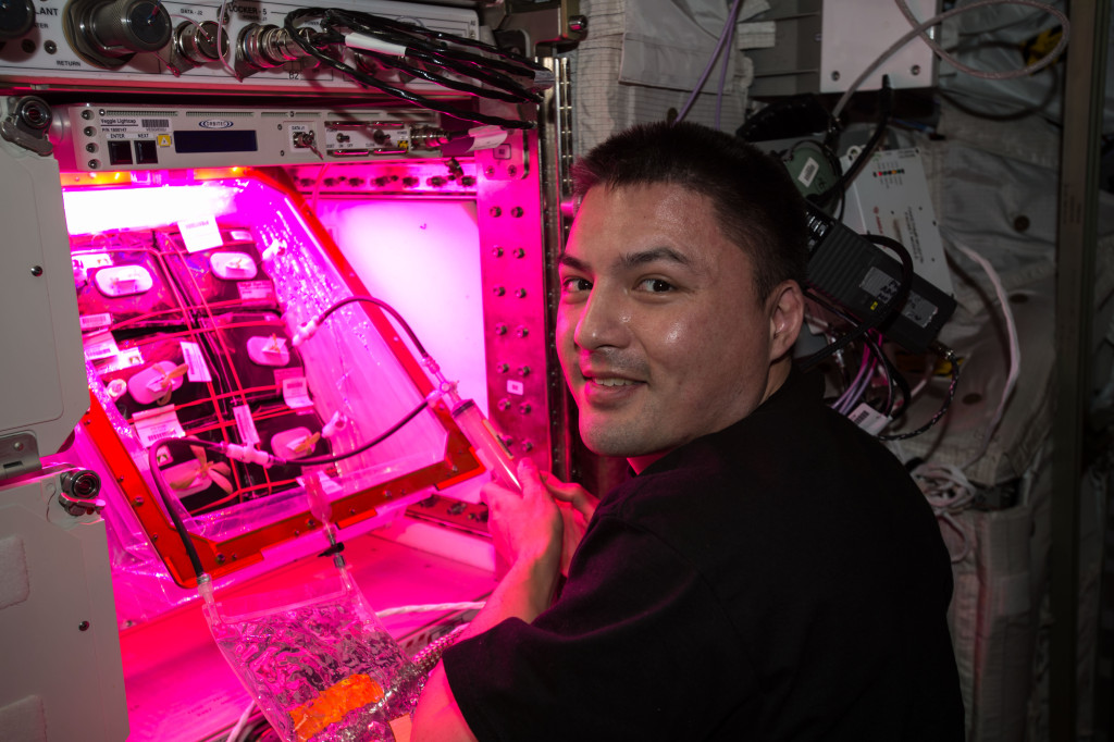 NASA Astronaut Kjell Lindgren waters the zinnia seeds in their individual plant pillows through a syringe system. Image Credit: NASA